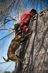 Hunde Biss abwehren Verteidigung